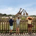 Giraffes at Beeksebergen