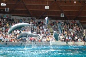 Dolphin show at Boudwijn sea park