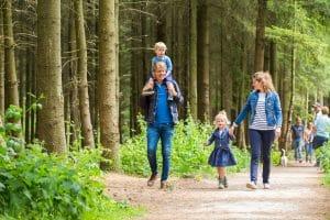 Esbeek forest