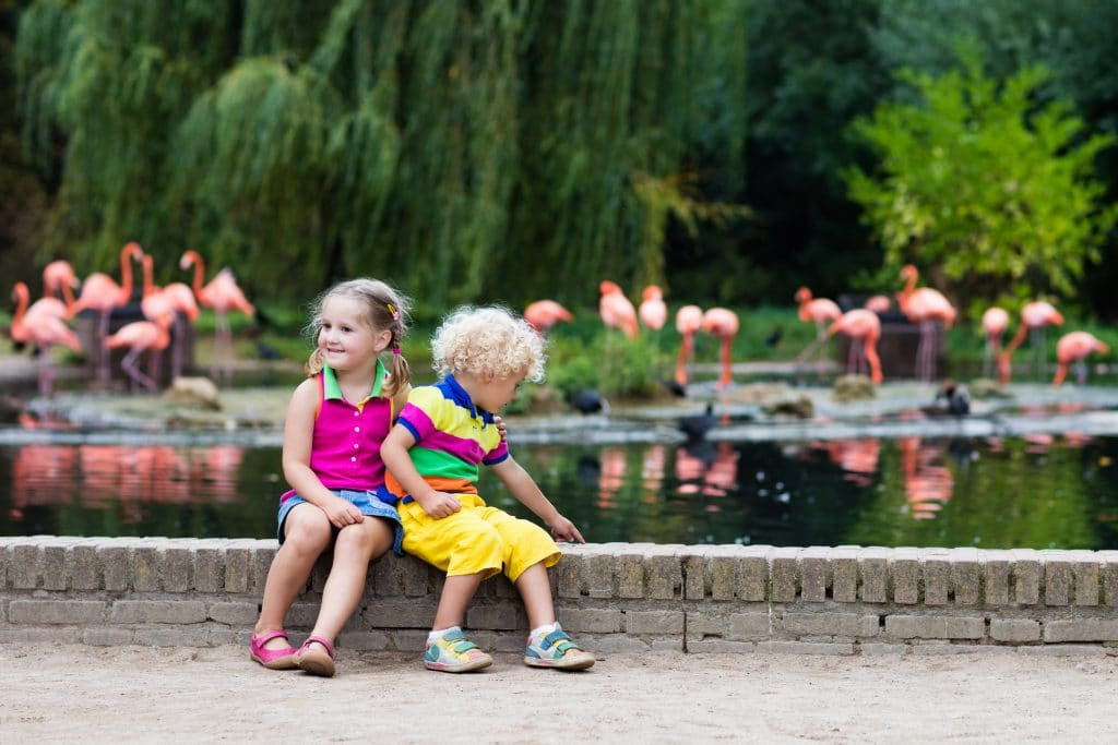 Toddlers spotting flamingos at a zoo