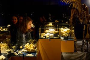 Natural history museum Maastricht