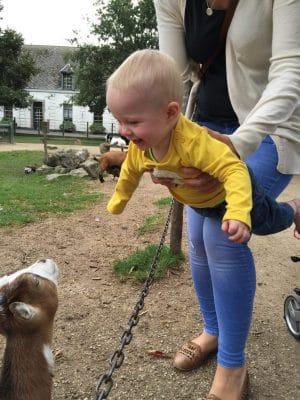 Meeting the goats at Pairi Daiza