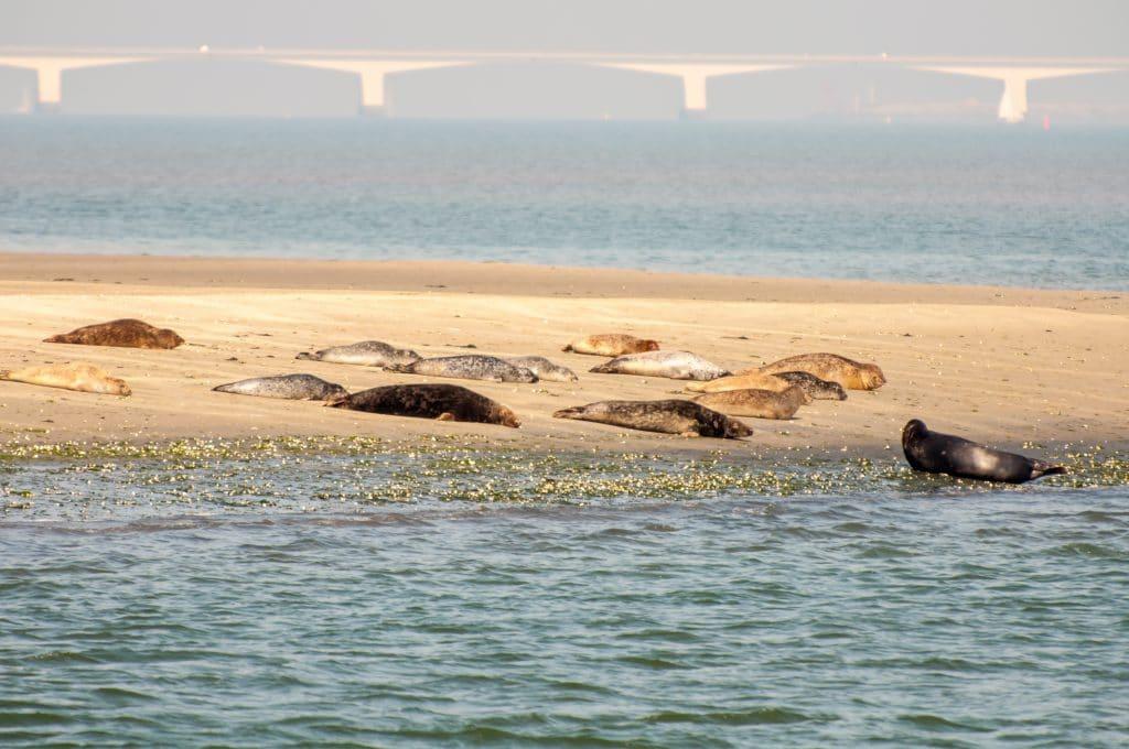 Seals basking on beach