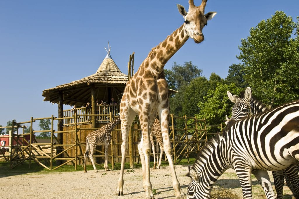 Bellewaerde zoo