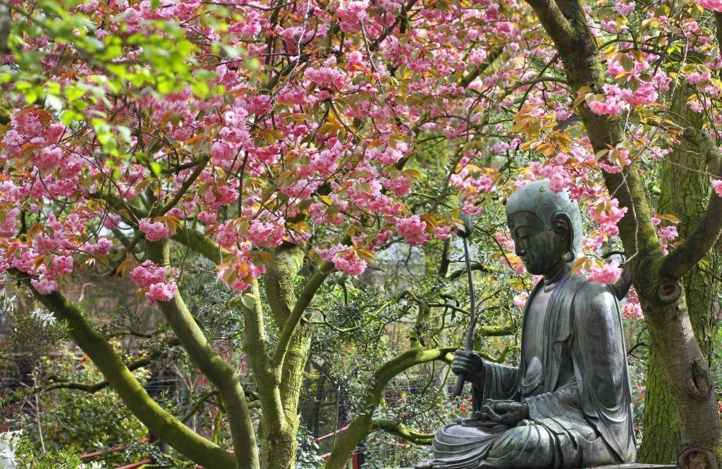 Buddha at Artis zoo