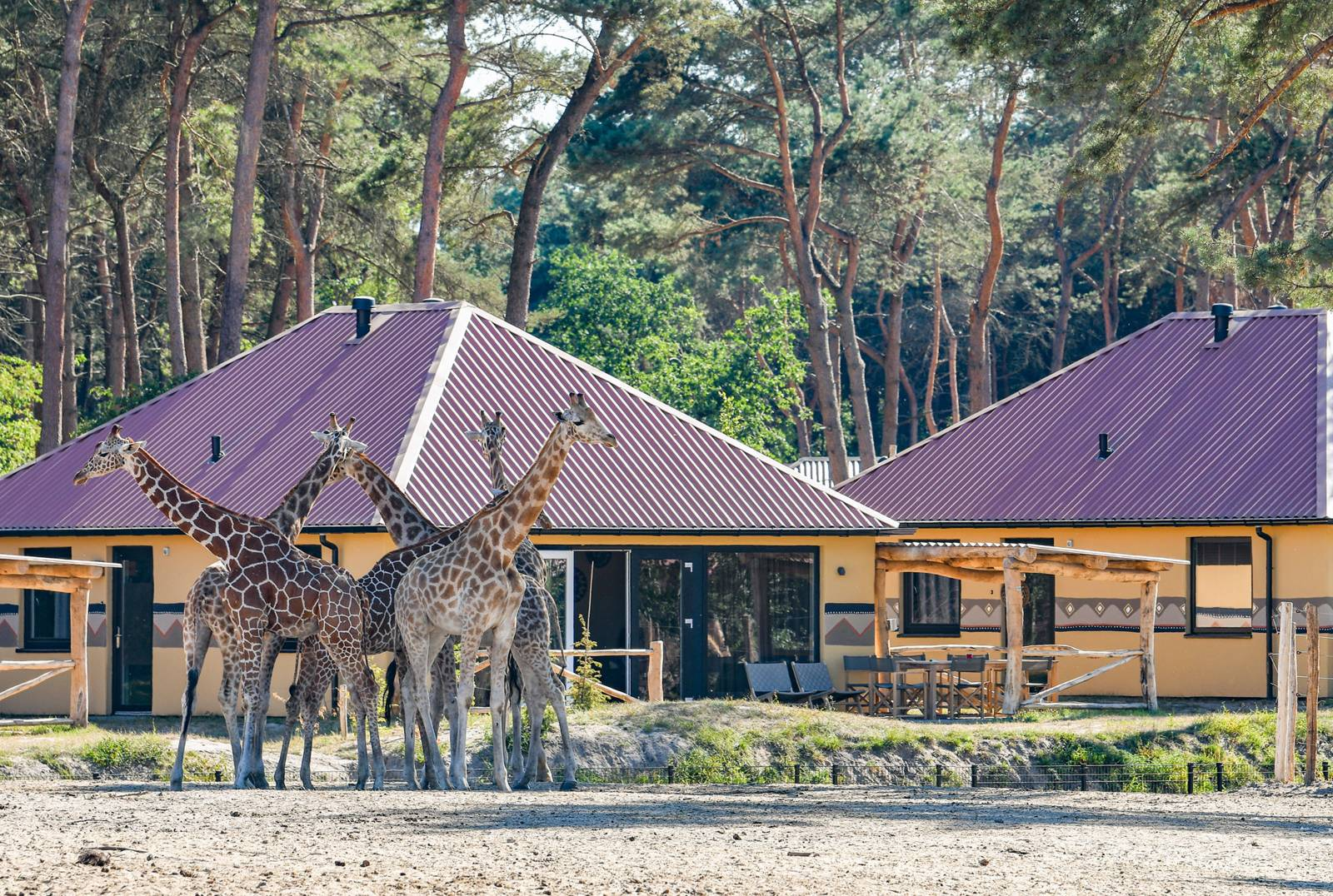 Beekse Bergen Safari Resort